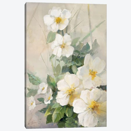 Lovely Anemones Canvas Print #HAE180} by Willem Haenraets Canvas Art Print