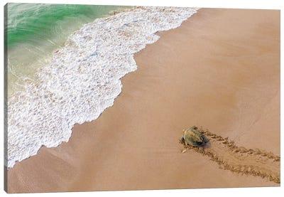 Turtle Season Canvas Art Print