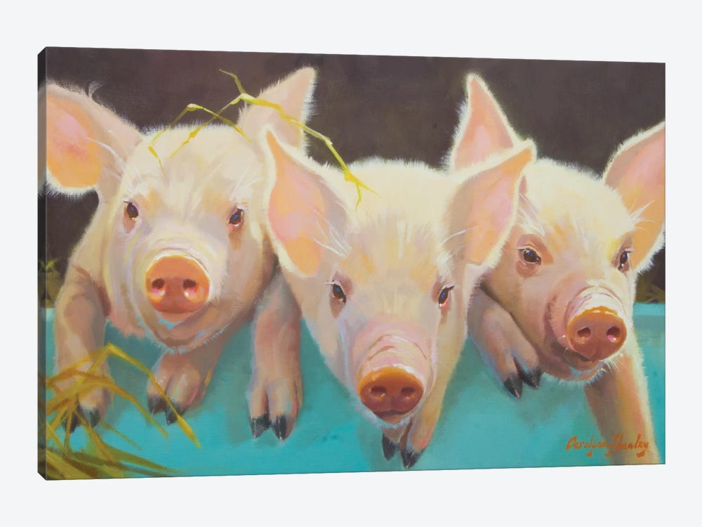 Life As A Pig I by Carolyne Hawley 1-piece Canvas Print