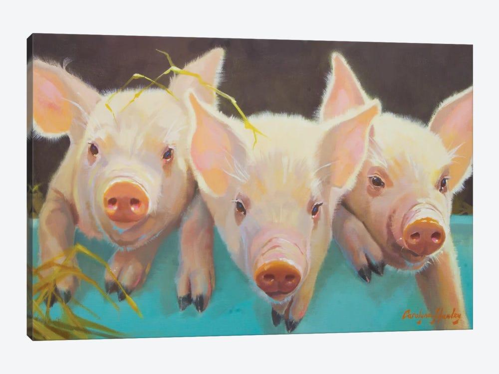 Life As A Pig I by Carolyne Hawley 1-piece Canvas Print