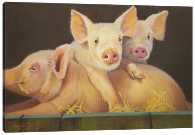 Life As A Pig III Canvas Art Print