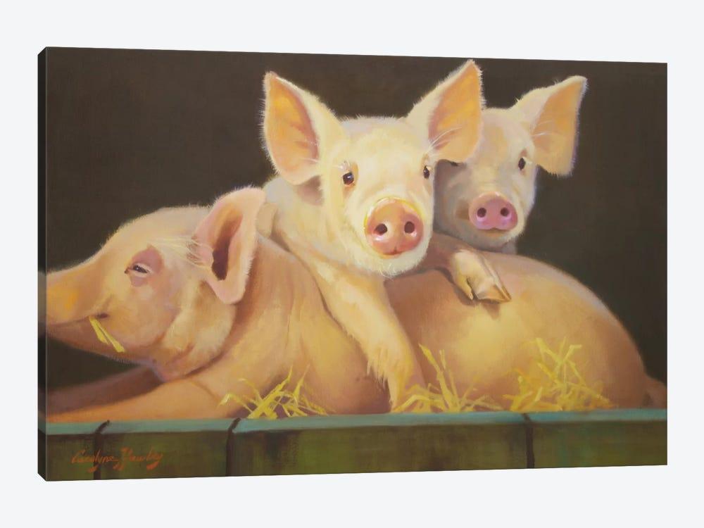 Life As A Pig III by Carolyne Hawley 1-piece Canvas Print