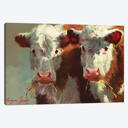 Cow Belles Canvas Print #HAW1} by Carolyne Hawley Canvas Print