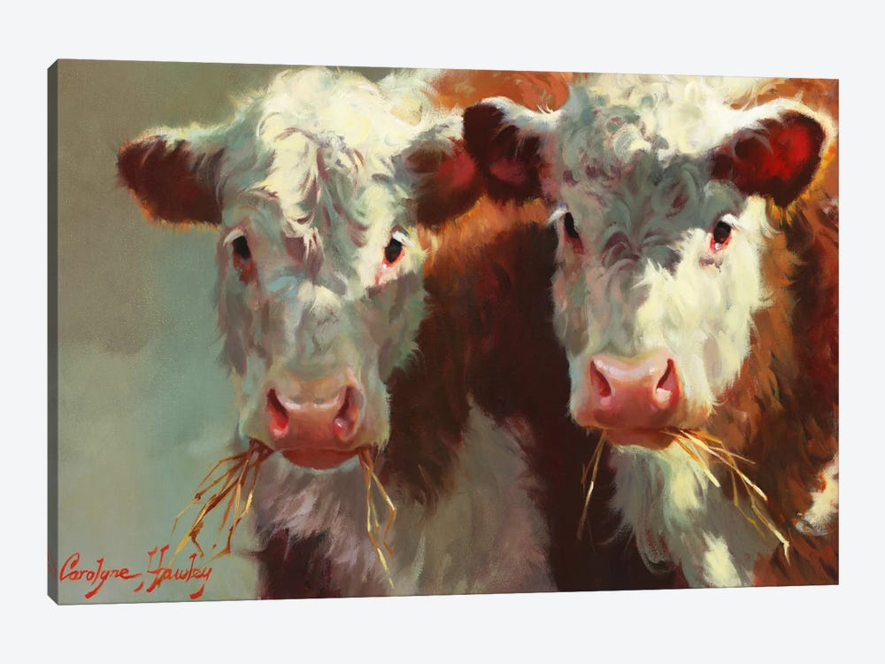 Cow Belles by Carolyne Hawley 1-piece Canvas Print