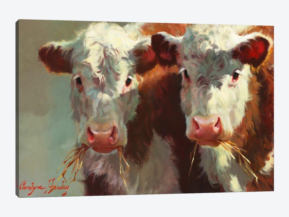 Cow Belles by Carolyne Hawley 1-piece Canvas Print