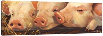 Pig Heaven Canvas Art Print