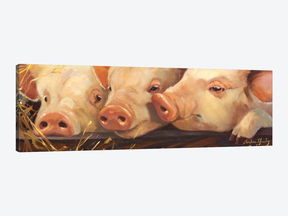 Pig Heaven by Carolyne Hawley 1-piece Canvas Wall Art