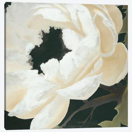 Floral Study Canvas Print #HAX5} by KC Haxton Canvas Print