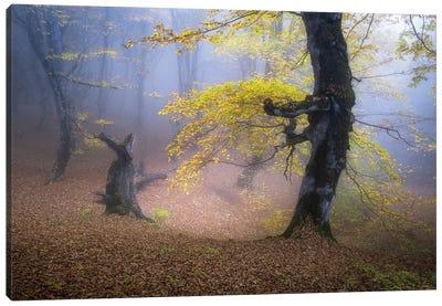 Fog In Mazichal Forest Canvas Art Print