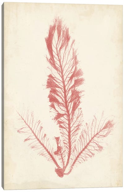 Coral Sea Feather I Canvas Art Print