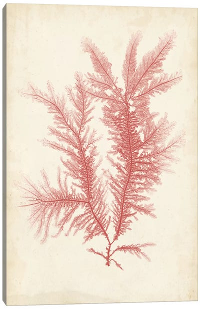 Coral Sea Feather II Canvas Art Print