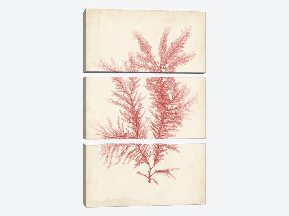 Coral Sea Feather II by Henry Bradbury 3-piece Canvas Art Print