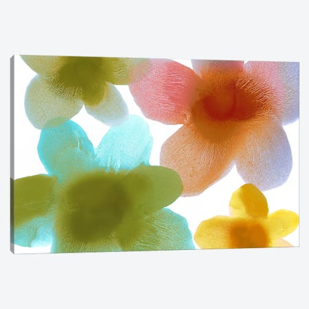 Floral Blooms I Canvas Print #HCA28} by Hannah Carlson Art Print