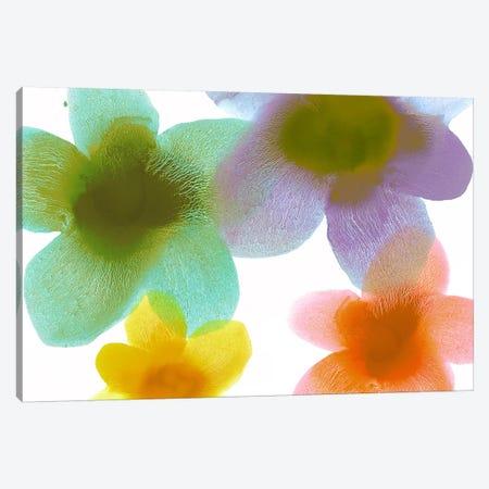Floral Blooms II Canvas Print #HCA29} by Hannah Carlson Canvas Print