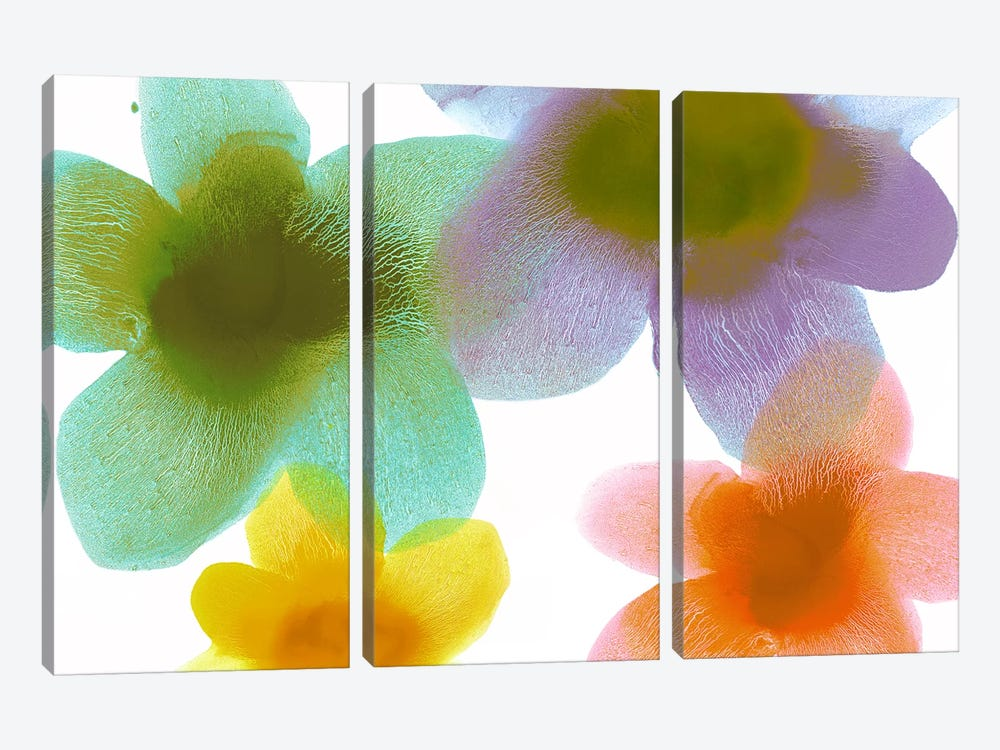 Floral Blooms II by Hannah Carlson 3-piece Canvas Artwork