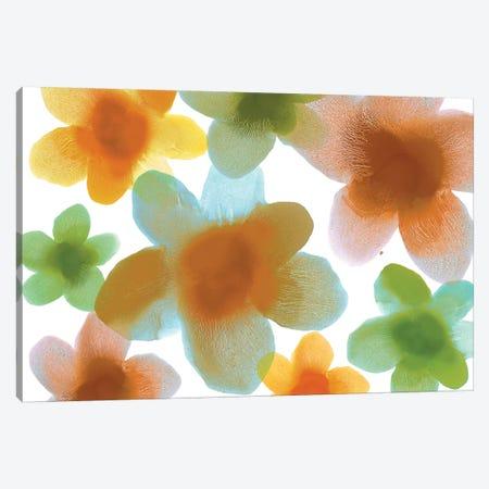 Floral Blooms IV Canvas Print #HCA31} by Hannah Carlson Canvas Art