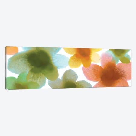 Floral Blooms VII Canvas Print #HCA36} by Hannah Carlson Art Print