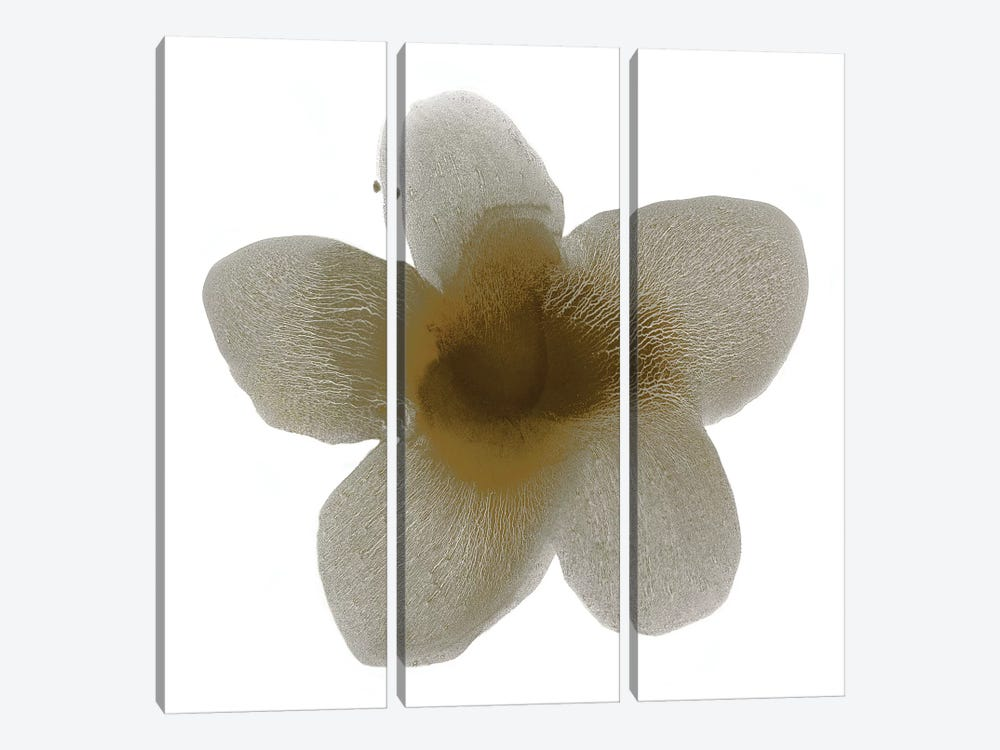 Taupe Bloom II by Hannah Carlson 3-piece Canvas Print