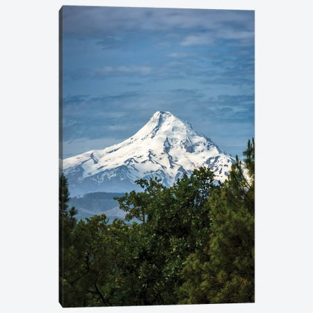 Snowcapped Mt. Jefferson framed by trees in the foreground Canvas Print #HDD13} by Sheila Haddad Canvas Artwork