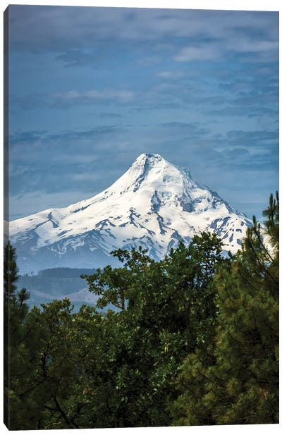 Snowcapped Mt. Jefferson framed by trees in the foreground Canvas Art Print
