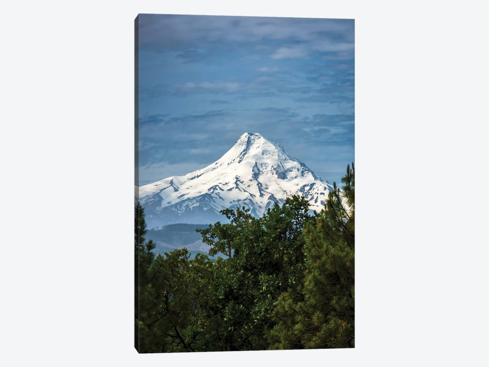 Snowcapped Mt. Jefferson framed by trees in the foreground by Sheila Haddad 1-piece Art Print