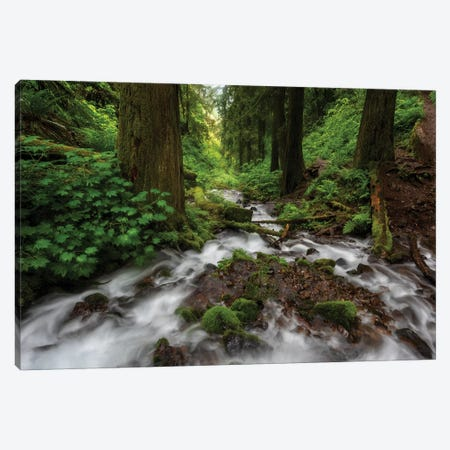 Soft moving stream through a canyon of forest Canvas Print #HDD14} by Sheila Haddad Canvas Print