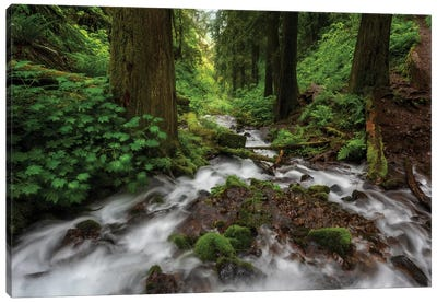 Soft moving stream through a canyon of forest Canvas Art Print