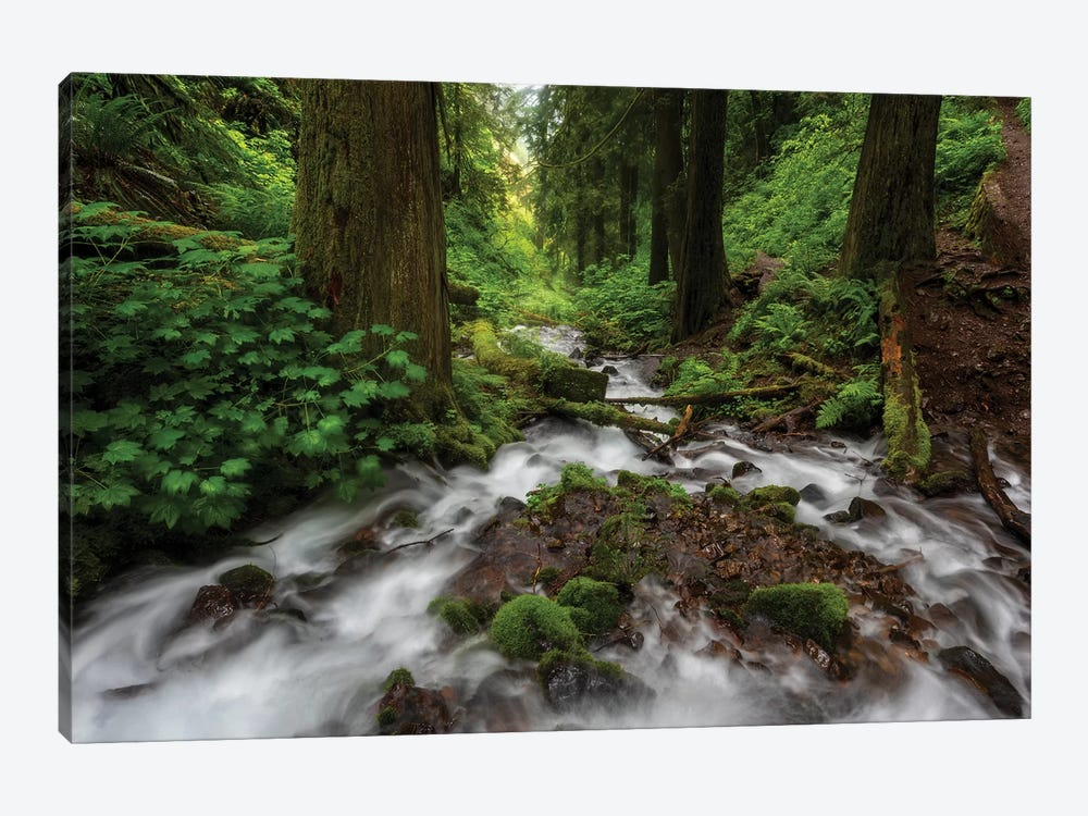 Soft moving stream through a canyon of forest by Sheila Haddad 1-piece Canvas Wall Art