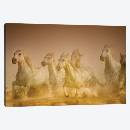Galloping Herd Of Camargue Horses II, Camargue, Provence-Alpes-Cote d'Azur, France Canvas Print #HDD2} by Sheila Haddad Canvas Wall Art