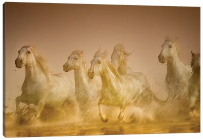 Galloping Herd Of Camargue Horses II, Camargue, Provence-Alpes-Cote d'Azur, France Canvas Art Print