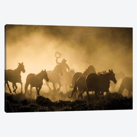 A wrangler herding horses through backlit dust cloud in golden light of sunrise Canvas Print #HDD3} by Sheila Haddad Canvas Wall Art