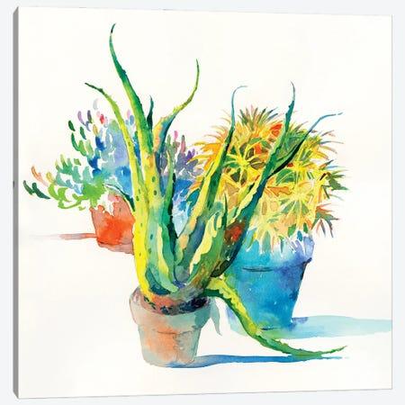 Succulent Trio I Canvas Print #HDL15} by Theresa Heidel Canvas Art Print