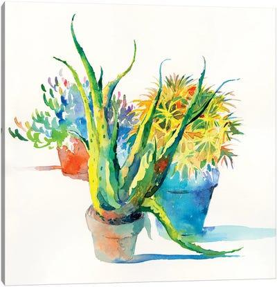 Succulent Trio I Canvas Art Print