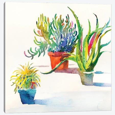 Succulent Trio II Canvas Print #HDL16} by Theresa Heidel Canvas Art Print