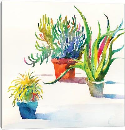 Succulent Trio II Canvas Art Print