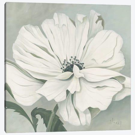 White Poppy Canvas Print #HEI17} by Franz Heigl Canvas Print