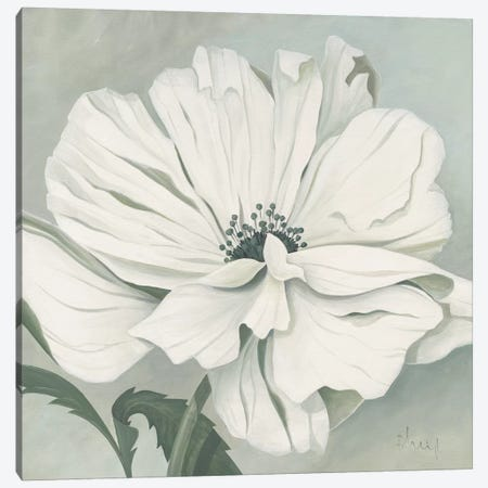 White Poppy Canvas Print #HEI17} by Franz Heigl Canvas Print