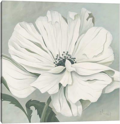 White Poppy Canvas Art Print