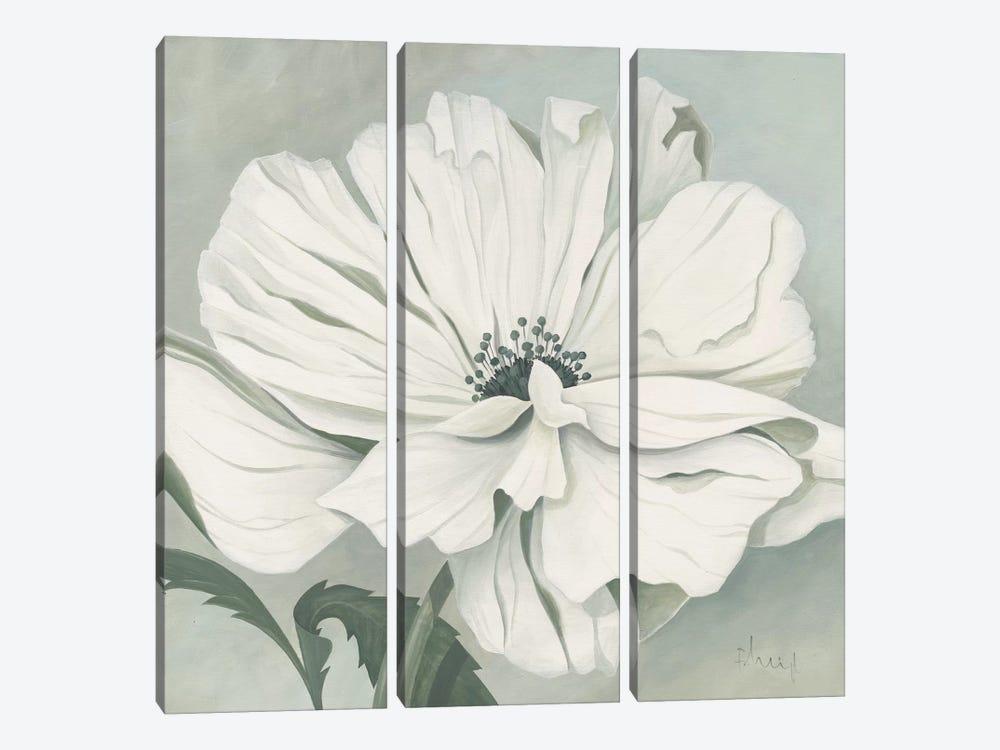 White Poppy by Franz Heigl 3-piece Canvas Art