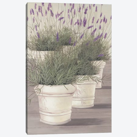 Lavender Canvas Print #HEI8} by Franz Heigl Canvas Art