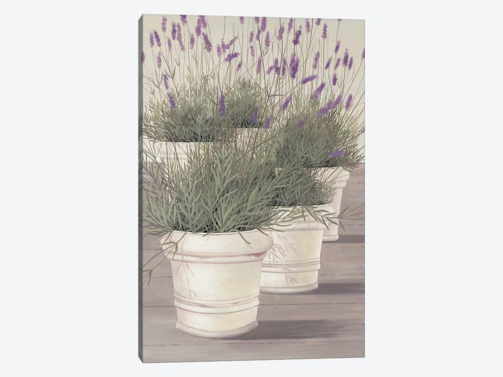 Lavender by Franz Heigl 1-piece Canvas Print