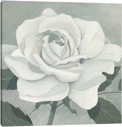 Rose One Canvas Art Print