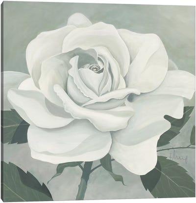 Rose One Canvas Art Print