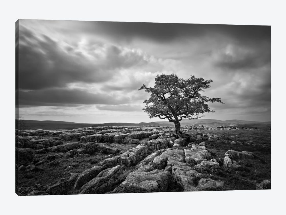 Pavement & Tree I by Martin Henson 1-piece Canvas Wall Art