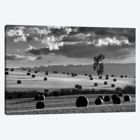 Rolls Of Hay Canvas Print #HEN20} by Martin Henson Canvas Wall Art