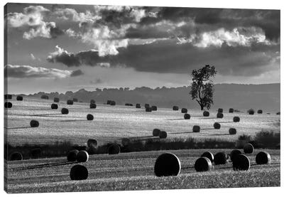 Rolls Of Hay Canvas Art Print