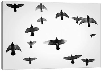 In The Skies I Canvas Art Print