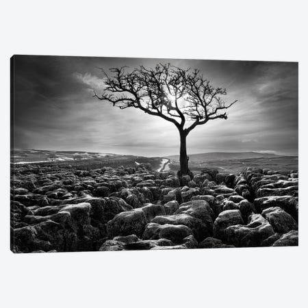 Grikes & Clints Canvas Print #HEN7} by Martin Henson Canvas Artwork