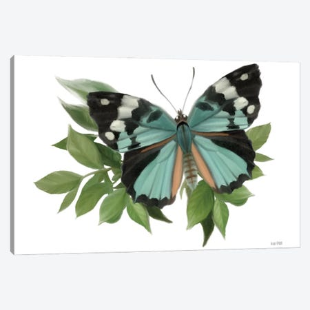 Botanical Butterfly Common Gem Canvas Print #HFE100} by House Fenway Canvas Print