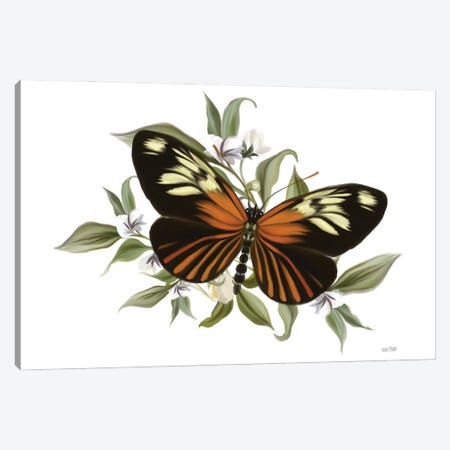 Botanical Butterfly Heliconius Canvas Print #HFE101} by House Fenway Canvas Print